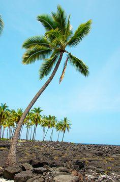 Pu`uhonua O Hōnaunau National Historical Park on The Big Island of Hawaii