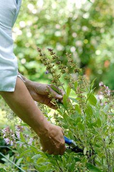 and she gathers wildflowers. Grandmas Garden, Growing Greens, Down On The Farm, Flower Farm, Summer Garden, Dream Garden, Cottage Chic, Country Life, Garden Plants