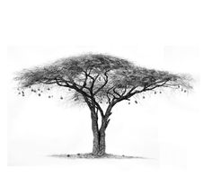 Charcoal Drawings by Ashleigh Olsen- Acacia and Weaver Nests, Drawing of Acacia tree Acacia, Charcoal Art, Charcoal Drawings, African Tree, Baobab Tree, Pine Tree Tattoo, Tree Sketches, Unique Drawings, Celtic Tree