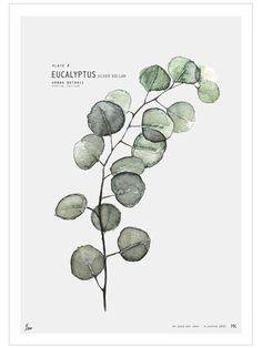 My Deer Eukalyptus Print (50x70cm)