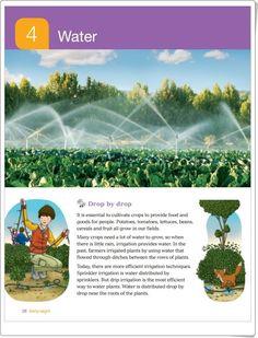 """Unidad 4 de Social Science de 3º de Primaria: """"Water"""""""