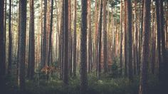 Preview wallpaper forest, pine, trees, grass 3840x2160