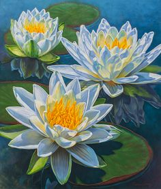 Fiona Craig, 'Water Lilies: Fire and Ice', painting + prints at… Water Lilies Painting, Lotus Painting, Lily Painting, Fabric Painting, Painting Prints, Watercolor Flowers, Watercolor Paintings, Lotus Art, Flower Art