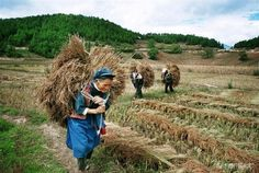 Farming done by humans.