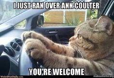 Go Kitty!