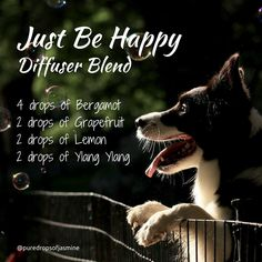 Just Be Happy Diffuser blend - Uplifting - Bergamot, Grapefruit, Lemon, Ylang Ylang