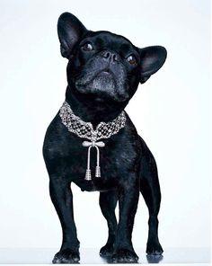 Dog Necklaces