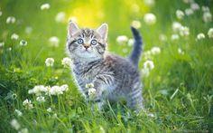 Kitten in grass enjoying