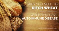 "Wheat consumption has now been confidently identified as both the initiating process in autoimmunity, as well as a perpetuating factor. Autoimmunity is just one way that tells us that this ""food"" w..."