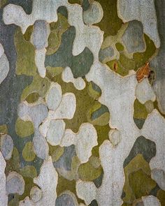 Colour Pallete, Colour Schemes, Patterns In Nature, Textures Patterns, Art Grunge, Grunge Outfits, Tree Art, Natural Texture, Color Inspiration