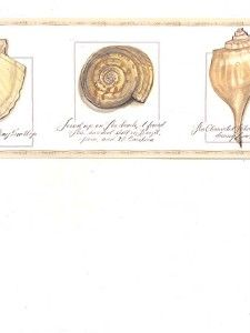 Seashell Border Wallpaper Her Co Shells