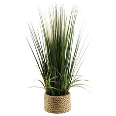 Shop for 30-inch Mixed Grasses in Ceramic Planter. Get free shipping at Overstock.com - Your Online Home Decor Outlet Store! Get 5% in rewards with Club O!