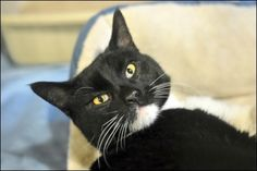 Groves is one of the nicest and funniest kitties currently at Animal Haven! He LOVES other cats too!