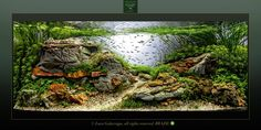 Nice use of rock work. Nature Aquarium, Planted Aquarium, Paludarium, Freshwater Aquarium, Fish Tank, Fresh Water, Aquascaping, Nice, Plants
