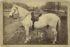 "Frank, a Civil War mount, was present at Gettysburg-  "" Image of a white horse in saddle and bridle with US brand on left leg standing in middle of a dirt street; reverse with printed history and list of battle in which Frank participated: 14 battles from Gettysburg to Appomattox, serving with Battery D, 1st N.Y. Artillery, 5th Army Corps ""  Gives you chills."