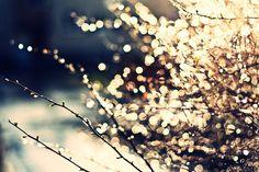 """Flowers Bokeh """"Lorena Masi"""""""