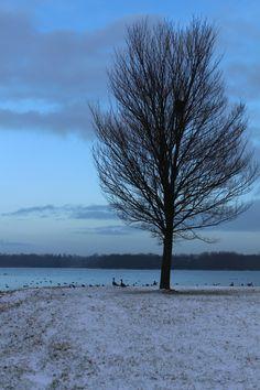 Zaterdag 24 januari 2015, Almere, De Boom
