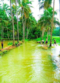 Village Photography, Landscape Photography, Nature Photography, Kerala Travel, Kerala Tourism, Nature Images, Nature Pictures, Natural Pond, Exotic Beaches