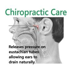 Does your child get ear infections? A chiropractic adjustment releases pressure within the ear to allow normal drainage. Try chiropractic before antibiotics or drilling holes in your child's ear! Benefits Of Chiropractic Care, Chiropractic Quotes, Family Chiropractic, Chiropractic Wellness, Chiropractic Office, Chiropractic Assistant, Chiropractic Therapy, Ear Drainage, Eustachian Tube Dysfunction