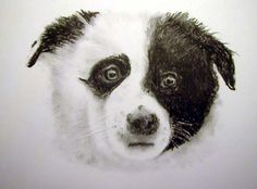 Charcoal pup  2 x 3- James Colter