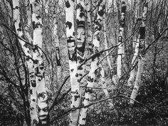 2D INSTALLATION/RE-PHOTOGRAPHING PHOTOS: Jorma Puranen (Finland)