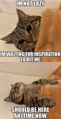 I'm not lazy. I'm waiting for inspiration to hit me. #Humpdaymemes #Funnyhumpdaymemes #Lazywednesdaymemes #Wednesdaymeme #Funnywednesdaymemes #Wednesdaymemesforwork #Wednesdayworkmemes #Wednesdaymorningmemes #Funnywednesdayimages #Funnywednesdayquotes #Happywednesdaymemes #Wednesdaymemescute #Wednesdaymemespositive #Wednesdaymemesanimals #Wednesdayevememes #Memes #Funnymemes #Memes2020 #Wednesdaysmeme #Bestwednesdaymemes #Funnyquotes #Sarcasticquotes #Laughablequotes #Wittyquotes…
