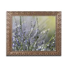 Trademark Fine Art Beata Czyzowska Young Spring Morning Framed Wall Art - BC0276-G1114F