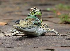 Казалось бы, вот уж лягушками-то нас точно не удивишь, но индонезийский фотограф Tanto Yensen смог снять их по-новому.