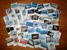 Every Star Is Different: Free animals of Antarctica cards