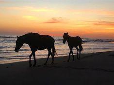 Sunset Costa Rica, Peninsula Papagayo, Sun Photo, Pretty Horses, Sunset Photography, Pacific Coast, Beautiful Sunset, Sunsets, Camel