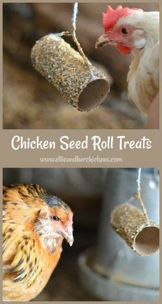 A high protein chicken treat your hens will love. - Laura - A high protein chicken treat your hens will love. Easy and Healthy Chicken Seed Roll Treats - A great way to reuse toilet paper rolls, and also treat your chickens. Chicken Garden, Backyard Chicken Coops, Chicken Coop Plans, Building A Chicken Coop, Diy Chicken Coop, Raising Backyard Chickens, Baby Chickens, Keeping Chickens, Treats For Chickens