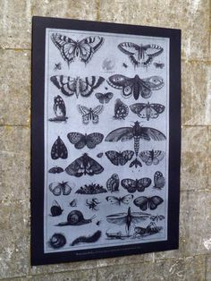Screen print of Wenceslaus Hollars's '41 Insects'. Heavy black stock and silver water-based ink. 50 x 70 cm.