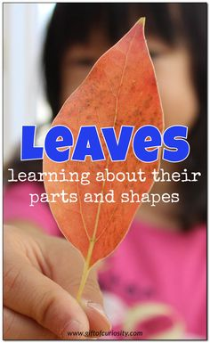Learning about leaf parts and leaf shapes with real leaves and printable resources || Gift of Curiosity
