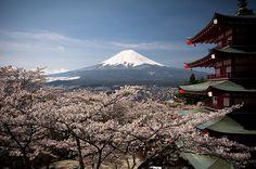 very cool picture of Mt. Fuji (Japan). love the contrast between the cherry blossoms, traditional japanese architecture, and the snow-capped mountain