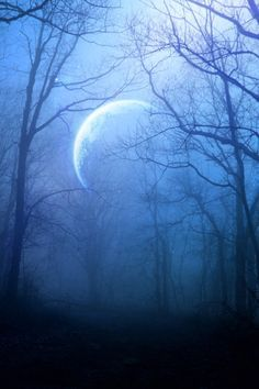 in the misty moonlight Beautiful Moon, Beautiful World, Shoot The Moon, Moon Pictures, Moon Pics, Moon Photos, Moon Magic, All Nature, Blue Forest