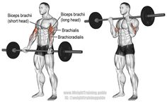 """4*6 Barbell curl. An isolation exercise. Target muscle: Biceps Brachii. Synergists: Brachialis, and Brachioradialis. Note: By adjusting your grip, you can emphasize the different heads of your biceps. Visit site and read the """"Comments and tips"""" for details."""
