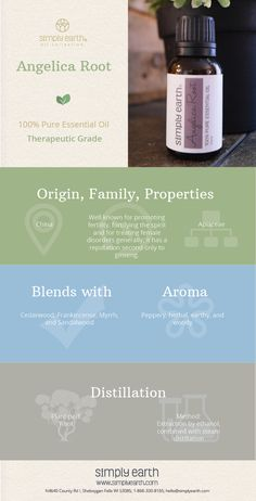 We'd like to go deeper with you into angelica root essential oil's many uses & benefits before you actually buy it. This oil has an arsenal of healing properties enveloped into it. The root of the angelica tree is the major source of essential oil through steam distillation. The oil color ranges from clear to light yellow. The seeds are also a source of clear essential oil, but we focus on the root oil in this blog post.
