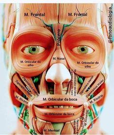 Pin on Escuela Pin on Escuela Gross Anatomy, Brain Anatomy, Medical Anatomy, Human Anatomy And Physiology, Human Body Anatomy, Medicine Notes, Medicine Student, Dental Hygiene School, Facial Aesthetics