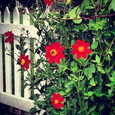 Flower garden in TN