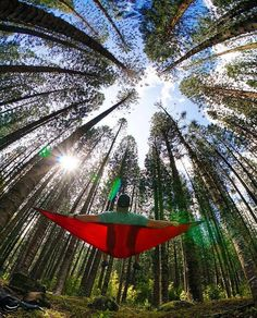 There's no WiFi in the forest but you'll definitely find a better connection. #TrekLightGear plants two trees for every hammock sold.  : @theanthonycastro