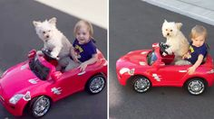 Dog 'drives' little boy in toy car, breaks speed limit for cuteness Little Boy Toys, Toys For Boys, Little Boys, Today Latest News, Today Show, Cute Baby Animals, Dog Toys, Dog Training, Best Dogs