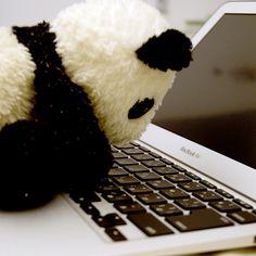 MacBook panda