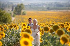 Our bride Faye told us that she had a dream...To have a photo shoot with Aaron in a sunflowers field! And our photographer Mark by Valentina weddings made it come true!