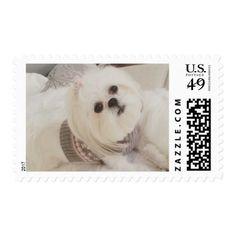 Darling Ava White Shih Tzu Christmas postage stamp - christmas cards merry xmas diy cyo greetings