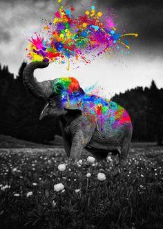 Elephant Colour, Colorful Elephant, Colorful Animals, Elephant Love, Elephant Artwork, Elephant Tapestry, Elephant Canvas, Beautiful Artwork, Cool Artwork