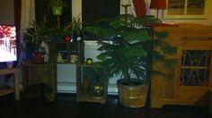Arrangements avec caisses de pommes Aquarium, Plants, Apples, Aquarius, Fish Tank, Flora, Plant, Planting