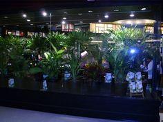 """Livraria da Travessa, Leblon, RJ.  Vitrine só com plantas para o lançamento do livro """"Marina Silva"""", 2010. www.travessa.com.br"""