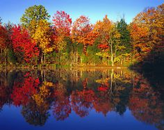 I Google imaged Fall Trees and gasped at it's beauty.