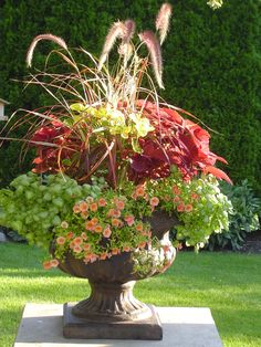 Patio sun planters with the morning sun lighting up the coleus and purple fountain grass. Landscaping Inspiration, Spring Decor, Lawn And Garden, Beautiful Flowers, Spring Planter, Floral Container, Planters, Garden Containers, Outdoor Planters