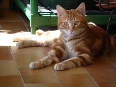 Red, la new entry, gatto adottato da OIPA.